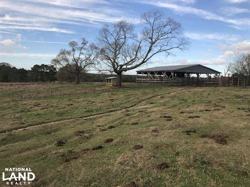 Rolling Hills Cattle Farm : Carson : Jefferson Davis County : Mississippi