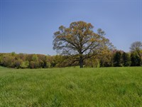 Oak Tree Farm : Louisa : Louisa County : Virginia