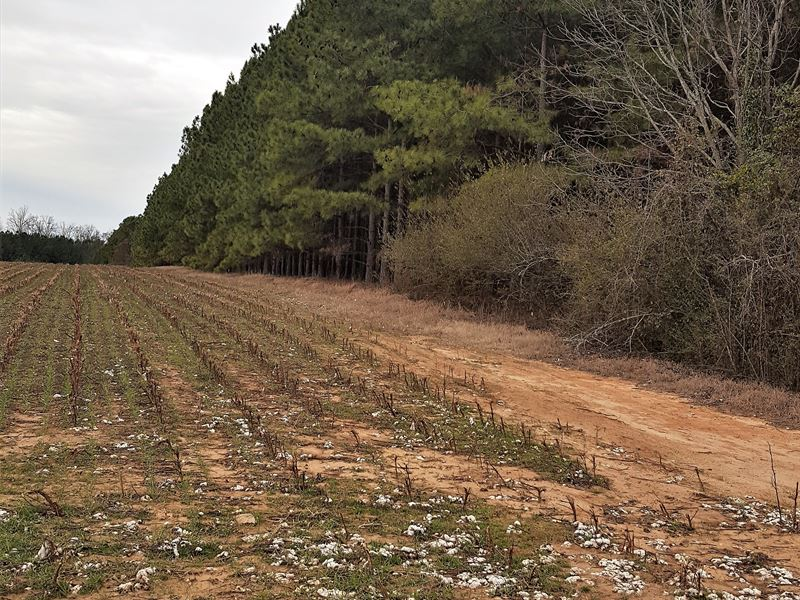 Padgett Pond Road Tract : Farm for Sale : Ridge Spring