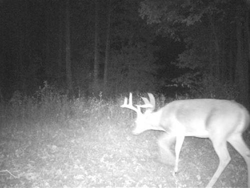 93 Acres Pasture/Timberland NE : Enola : Faulkner County : Arkansas