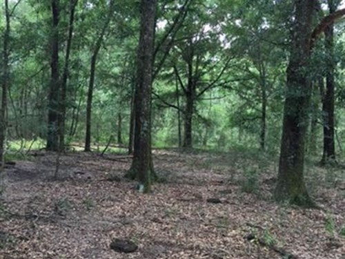 Roberts Road Tract - 70+/- Acres : Citronelle : Mobile County : Alabama