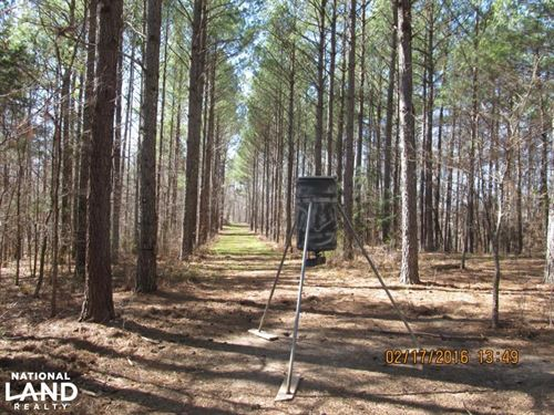 263 Acres of Premier Hunting in Hol : Lexington : Holmes County : Mississippi