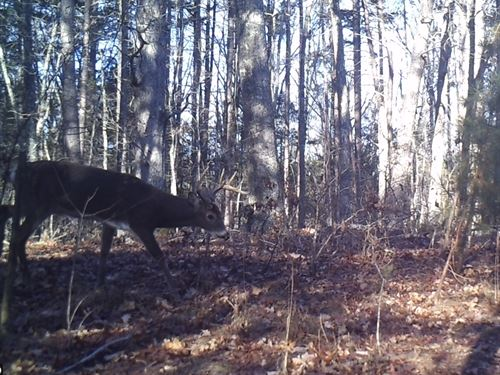 39 Acres Prime Hunting Land Red Oak : Red Oak : Charlotte County : Virginia