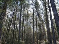 Sansavilla Timber Deed : Jesup : Wayne County : Georgia