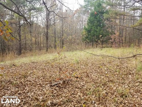 78 Acre Holmes County Hardwood Hunt : Lexington : Holmes County : Mississippi