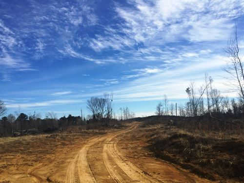 Tract 1516- Sealed Bid Land Sale : Middleton : Hardeman County : Tennessee
