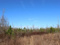 Inexpensive Hunting Tract : Sparta : Hancock County : Georgia
