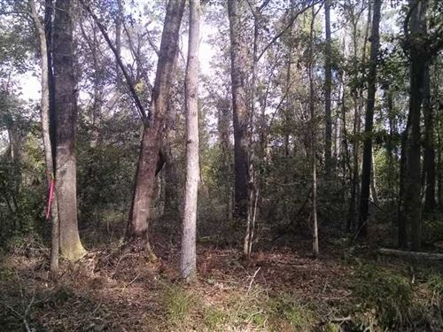 9+ Acres in Camden County, GA : White Oak : Camden County : Georgia