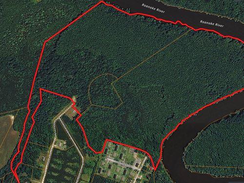 Roanoke River Timber/Hunting Tract : Jamesville : Martin County : North Carolina