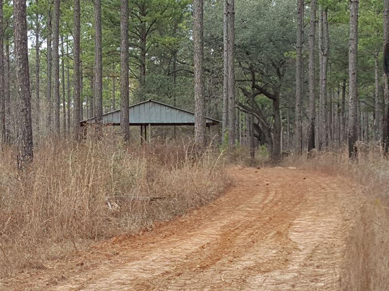 Prime Deer Quail Turkey Timber : Elmodel : Baker County : Georgia