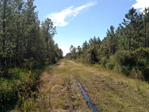 Excellent Timber Tract In Putnam Co : Palatka : Putnam County : Florida