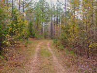 Excellent Timber & Hunting : Stoneboro : Lancaster County : South Carolina