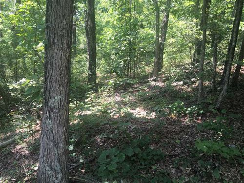 40 Beautiful, Wooded Acres in Ston : Mountain View : Stone County : Arkansas