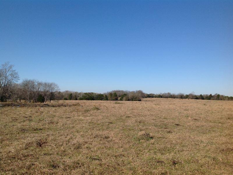 Cahaba River Cattle Farm : Marion Junction : Dallas County : Alabama