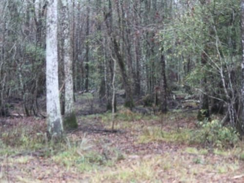 69 Acres In Jasper County, Ms : Stringer : Jasper County : Mississippi