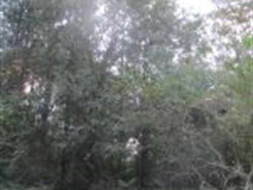244 +/- Acres In Alexander City, Al : Alexander City : Tallapoosa County : Alabama