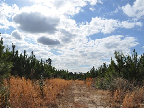 194 Acres Fm 247 : Huntsvulle : Walker County : Texas