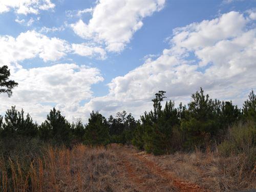 95 Acres Lost Indian Camp Road : Huntsville : Walker County : Texas