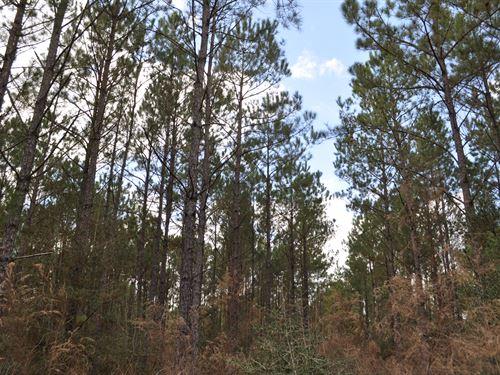 73 Acres Fm 247 & Lost Indian Camp : Huntsville : Walker County : Texas