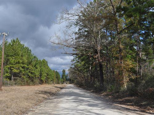 59 Ac Fm 247 & Lost Indian Camp Rd : Huntsville : Walker County : Texas