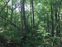5.81+/- Acres Ellijay Georgia : Talking Rock : Gilmer County : Georgia