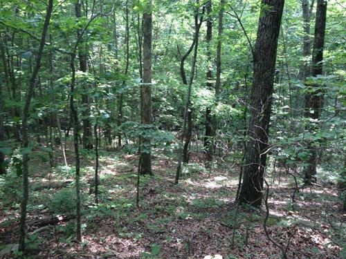 6+/-Acres On The Cumberland Plateau : South Pittsubrg : Marion County : Tennessee