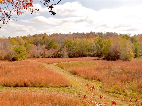 Bullock County Hill Tract : Union Springs : Bullock County : Alabama