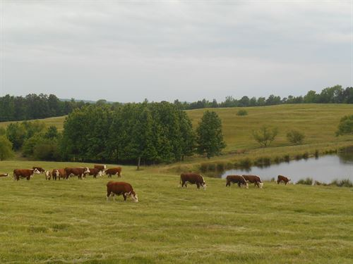 Beautiful Farm, See Video & Pics : Snead : Blount County : Alabama