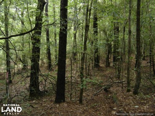 20 Acres Hunting & Timber Tract Nea : Winona : Carroll County : Mississippi