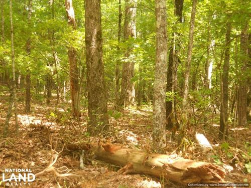 118 Acres of Hunting & Timber Inves : Duck Hill : Montgomery County : Mississippi