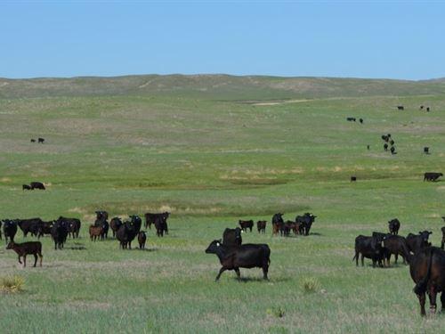 Mule Shoe Bar North Ranch : Alliance : Garden County : Nebraska