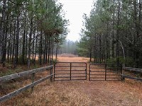 Timberland With Well And Homesite : Waresboro : Ware County : Georgia