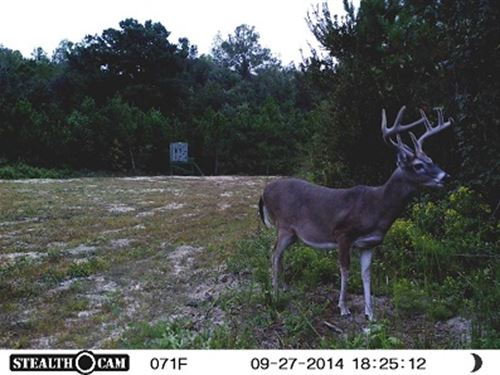 312 Ac Hunting Land In Barbour Co : Eufaula : Barbour County : Alabama