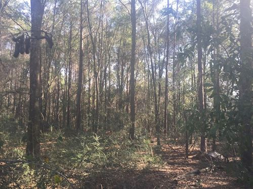 92 Ac Timberland In South Alabama : Geneva : Alabama