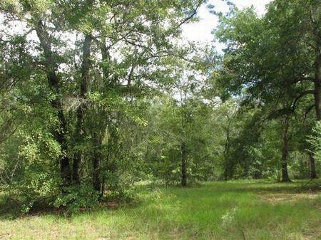 10 Acres (cl-057) : Hawthorne : Alachua County : Florida