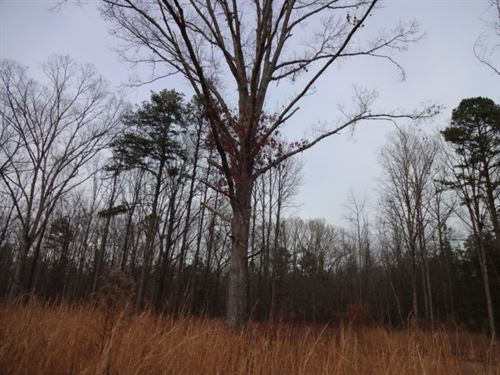 14.54 Acres Lickville Road, Bel : Belton : Greenville County : South Carolina