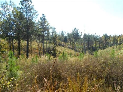 270 Acres In Carroll/ Montgomery Co : Carrollton : Carroll County : Mississippi