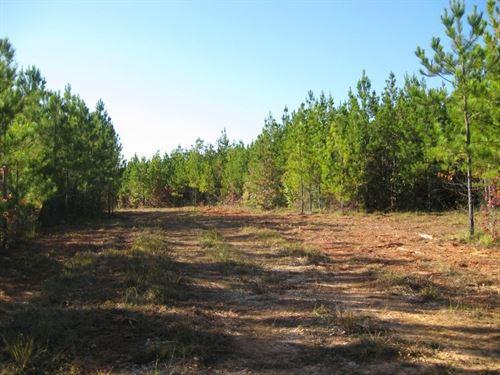 Phelps Creek : Opelika : Lee County : Alabama