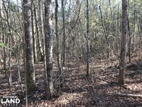 US 43 Hunting And Timber Investment : Bankston : Fayette County : Alabama