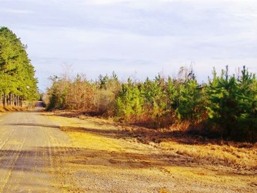 Hunting Land Liberty, Amite County : Liberty : Amite County : Mississippi