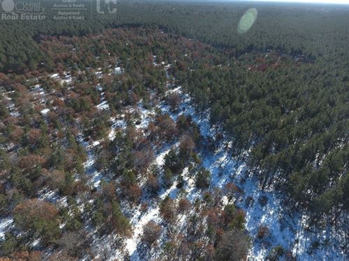 36 Acre Timber And Hunting Land : Nekoosa : Adams County : Wisconsin