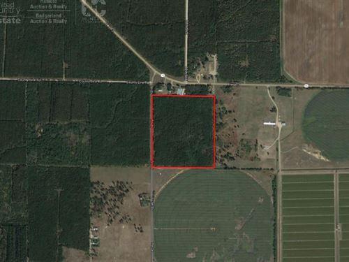 46 Acre Timberland Tract : Nekoosa : Adams County : Wisconsin