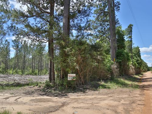 162 Ac Camp Seale Road : Livingston : Polk County : Texas