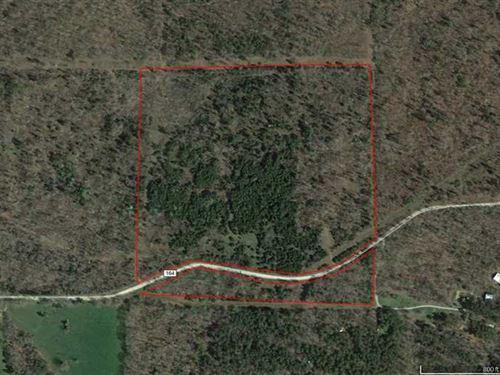 40 Recreational Acres With Nice Vi : Drury : Ozark County : Missouri