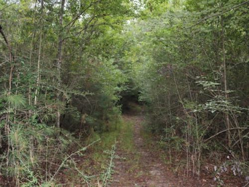 50 Acres In Forrest County, Ms : Petal : Forrest County : Mississippi