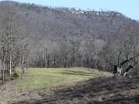 Hardwoods, Cabin, And Wildlife : Ider : DeKalb County : Alabama