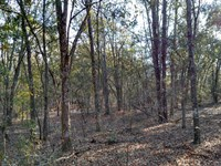 Nice 77 Acre Wooded Property : Camilla : Mitchell County : Georgia