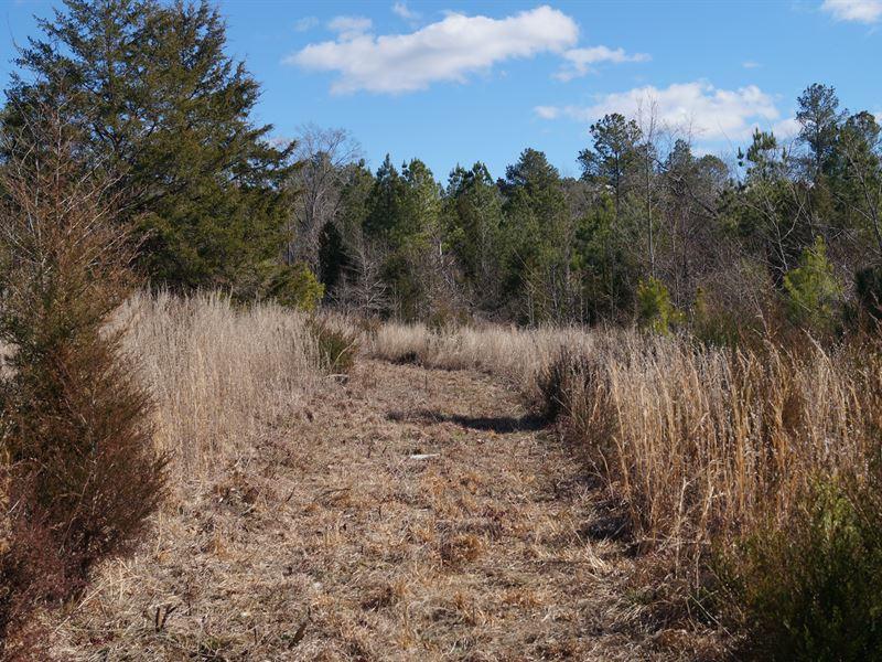 32 Acres - Newberry County, Sc : Prosperity : Kershaw County : South Carolina