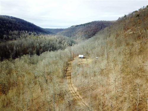 40 Acres With Secluded Cabin : Witts Springs : Searcy County : Arkansas