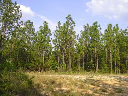 Nicholas : Red Level : Covington County : Alabama
